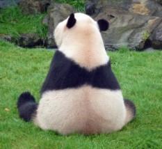 ジゴロパンダのプロフィール2のメイン画像