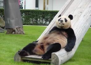プロフィール1のメイン画像のパンダ