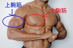 筋肉をつけると女性にモテる男になれるのかの筋肉画像