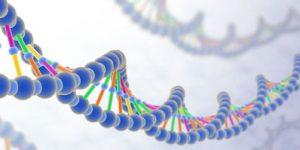 女性の口説き方のDNAイメージ